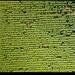 180704-0138-MAVICP-HDR.JPG