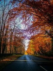 Autumnal drives through the Cotswolds 🍂 (smudgerjr@live.co.uk) Tags: bluesky cold england travel green yellow orange beautiful driving drive road trees leaves autumnal autumn cotswolds