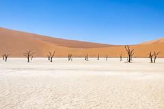 _RJS4682 (rjsnyc2) Tags: 2019 africa d850 desert dunes landscape namibia nikon outdoors photography remoteyear richardsilver richardsilverphoto safari sand sanddune travel travelphotographer animal camping nature tent trees wildlife