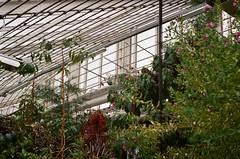 33970014 (Pomegranate_seeds) Tags: garden 35mm photography plants lora denmark travel travelling analog film filmography composition space interior indoors