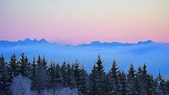 """""""Blaue Minuten"""" mit Abendröte- Blick vom Bayerwald in Ostalpen (waidlerwiki) Tags: blaueminuten abendhimmel abendrot abendlicht abendnebel ostalpen dachstein romantik österreich austria alpenblick alps bäume trees winter woodlands nebelmeer fog"""