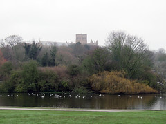 The Cathedral and Abbey Church of St. Alban, December 2018 (Dave_Johnson) Tags: stalbans saintalbans herts hertfordshire thecathedralandabbeychurchofstalban cathedral abbey stalbanscathedral stalbansabbey verulamium verulamiumpark park river lake ducks swans geese birds