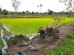 Rice paddies in Phon Phisai 3 (SierraSunrise) Tags: agriculture esarn farming grain isaan nongkhai paddyrice phonphisai pumps rice ricepaddies ricepaddy thailand