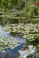 I fiori di Monet (Vassili Balocco) Tags: giverny monet francia france giardino garden fiori flowers natura nature outdoor travel