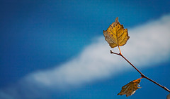Azzurro (Pepenera) Tags: sky azzurro cielo foglia nuvola