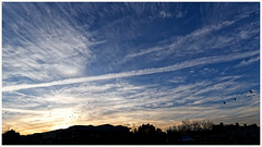 """2019/034: """"Where is your camera?"""" (Rex Block) Tags: 2019034gettingstarted nikon d750 dslr 18mm f35 zoom wideangle dc washington sunrise morning birds day start blue cirrus project365 365the2019edition 3652019 day34365 03feb19"""