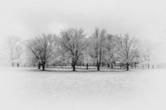Tower Grove in Winter (Jon Dickson Photography) Tags: winter scene stl stlouis towergrove park trees infrared blackwhite minimalist