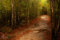 My Path (donna.chiofolo (on and off)) Tags: nature mood atmosphere light colors autumn path poetryinnature poetry wisdom discernment woods forest nikon outdoor travel travelgirl travelphotography composition florida milton arcadiamills