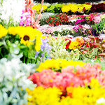 Variety of flowers in a flower shop thumbnail