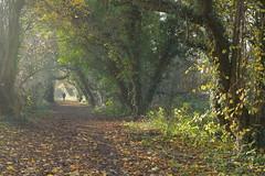 My Neck Of The Woods (Yorkshire Pics) Tags: swillington autumn 1511 15112018 15thnovember 15thnovember2018 eastleeds footpath selfie myselfie walking walker rambling rambler scenicwalks beautifulwalks