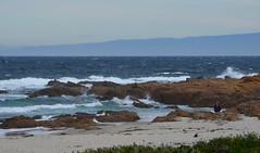 Morning waves crashing (afagen) Tags: california pacificgrove asilomarstatebeach montereypeninsula asilomar beach pacificocean ocean