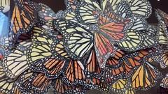 Denver Botanic Garden   2018.11.04   Migrating Monarchs (Kaemattson) Tags: denverbotanicgarden bgd denver denverco monarchbutterfly paper art fake flickrfriday orange yellow butterfly