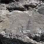 Limestone (Warix Run Member, Slade Formation, Upper Mississippian; Clack Mountain Road Outcrop, south of Morehead, Kentucky, USA) 3 thumbnail
