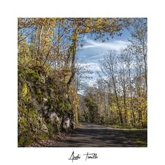 _ATP3753 (anahí tomillo) Tags: nikond7500 sigma1750f28 naturaleza nature paisaje landscape otoño autunm asturias