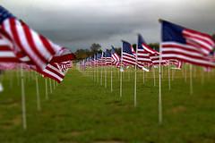 Flying Flags of Honor (TPorter2006) Tags: tporter2006 november 2018 flag us usa patriotic display plano tx red white blue veterans veteransday