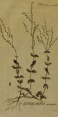 This image is taken from Page 70 of Flora Japonica : sistens plantas insvlarvm Japonicarvm secvndvm systema sexvale emendatvm : redaetas ad XX classes, ordines, genera et species : cvm differentiis specificis, synonymis pavcis, descriptionibvs concinnis e (Medical Heritage Library, Inc.) Tags: plant physiology rcplondon ukmhl medicalheritagelibrary europeanlibraries date1784 idb28039725