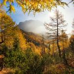 Framed in a golden forest thumbnail