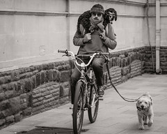 How cool dogs travel (raymorgan4) Tags: dogs bike ride hands free cycling passenger goggles sunglasses cardiff funny humour cool canon 77d eos niftyfifty