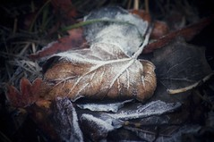Falling leaves hide the path so quietly (undefinable moods) Tags: leaf leaves autumn automne herbst fall frost countryside outside outdoor nature naturephotography naturaleza natur colors macro macrophotography