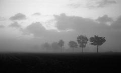 Yet another frosty morning (Rosenthal Photography) Tags: nebel landschaft 20181101 schwarzweiss anderlingen irfoto 35mm wense epsonv800 ff135 olympustrip35 ilfordlc2912920°c11min ilfordsfx städte infrarot analog asa200 dörfer siedlungen mist fog frost morning dawn sunrise november autumn landscape fields trees olympus olympus35 trip35 dzuiko zuiko 40mm f28 ilford sfx sfx200 lc29 129 epson v800