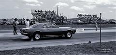 At the Drag Strip - 1972 (http://www.yashicasailorboy.com) Tags: chevy chevrolet car vehicle camaro dragracing races florida orlando 1970s dragway yashica tlelectrox kodak plusxpan bw