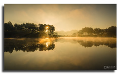 DSC_2098 (Yellow Autumn) Tags: