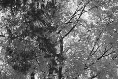Dark And Light - Black And White (Modkuse) Tags: nature natural trees autumn fall monochrome bw blackandwhite art artphotography photoart fineartphotography fineart fujifilm fujifilmxt2 xt2 xf55200mmf3548rlmois fujinon fujinonxf55200mmf3548rlmois nopostprocessing