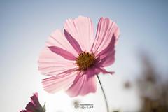 Blüte (stefanendres) Tags: himmel nature natur 760d eos canon stefan endres kleinrinderfeld herbst flower blumen blüten