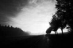 Let there be light (stefankamert) Tags: stefankamert light lettherebelight street road trees forest fog sky himmel ricoh gr grii ricohgr blackandwhite blackwhite noiretblanc noir landscape grain dawn