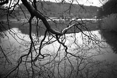 Horber Weiher (monochrome) (Toni_V) Tags: m2406516 rangefinder digitalrangefinder messsucher leicam leica mp typ240 type240 35lux 35mmf14asph 35mmf14asphfle summiluxm hiking wanderung randonnée escursione amriswilbischofszell thurgau thurgauerpanoramaweg lake see weiher dof bokeh horberweiher bw monochrome blackwhite schwarzweiss switzerland schweiz suisse svizzera svizra europe ©toniv 2018 180110