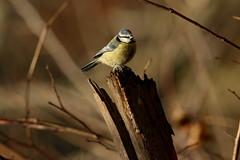 IMG_4784 (monika.carrie) Tags: monikacarrie wildlife scotland seatonpark