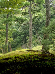 Leading Out of Pine Forest (Eshke04) Tags: leading pine trees green color light shadow soil stairs stone old garden koishikawa tokyo japan edo forest