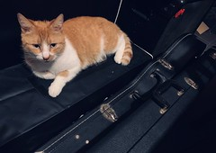 (adnogstreets) Tags: cat case amps amplifier guitar kat