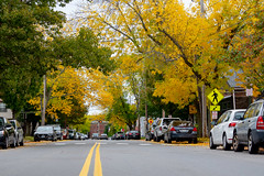 Green to Yellow Leaves on Danforth Street in the West End (Corey Templeton) Tags: city danforthstreet foliage maine newengland portland portlandmaine westend unitedstates us