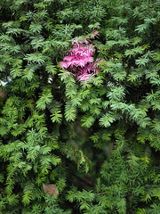 Das Pink. / 19.11.2018 (ben.kaden) Tags: berlin hohenschönhausen neuhohenschönhausen pablopicassostrase pink grün 2018 19112018
