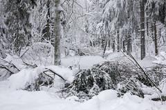 190112 Schneebruch (Bernd März) Tags: berndmärz schnee winter schneemassenösterreich schneeösterreich schneemassenalpen schneechaosösterreich obertauern schneechaosobertauern lawinenabgang lawinenabgangbayern lawinenabgangoberbayern lawinenabgangmarktschellenberg buchenhöhe schneechaosbuchenhöhe bundeswehr bundeswehrschneechaos schneechaosa8 a8hochfelln tankstellendach tankstellendachschneelast schneelast schneebruch schneebrucherzgebirge erzgebirgeschneebruch schneechaoserzgebirge scheibenberg