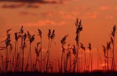 sunset (fotografia.KarolinaKwiatkowska) Tags: sun sky sunset sunsets sunnyday słońce sunsetlovers mazury masuria mazurycudnatury mazurymojamilosc masuren mazurskiejeziora mazurskaprzyroda nature natura naturelovers natur nofilter nadjeziorem niegocin jezioro jezioroniegocin poland polen polska