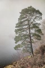 Lakeside (Glenn D Reay) Tags: ullswater lakedistrict cumbria tree lake water fog solitary pentaxart pentax k70 sigma1770hsm glennreay
