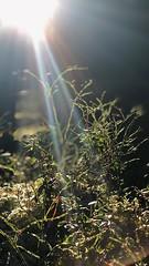 Gräset är alltid/aldrig grönare på andra sidan (suskon72) Tags: fs181202 fotosondag ordsprak