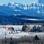 Alberta barn thumbnail