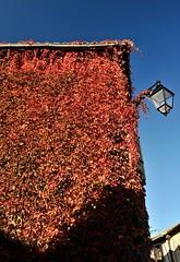 vigne vierge (jean-marc losey) Tags: france occitanie tarn puycelsi façade vignevierge lampadaire rouge randonnée automne autumn d700