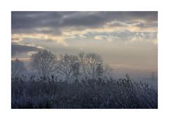 Sunrise Waterdonken Breda 07 (cees van gastel) Tags: ceesvangastel canoneos550d clouds sigma1020mm landscape landschap luchten natuur nature nederland netherlands noordbrabant breda water winter waterdonkenbreda waterakkers wolken sunrise zonsopkomst mist horizon einder