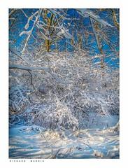 The Woods In Winter, Eynsford, Kent. (Richard Murrin Art) Tags: thewoodsinwinter eynsford kent snow trees sky richard murrin art