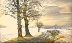A new dawn (Jan 130) Tags: jan130 christmas2018 farmland frost snow rural trees texture ngc npc coth coth5 rockpaper