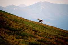 Italy 2018 (pjarc) Tags: europe europa italy italia trentino brunico plan de corones montagna mountain cavallo horse nature moment veduta view summer 2018 foto photo colori colors nikon dx