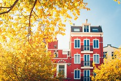 Autumn in Amsterdam (nicolasdoyen3) Tags: fall amsterdam nikon 35mm tree travel