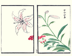 Showy Japanese lily and catchfly (Japanese Flower and Bird Art) Tags: flower showy lily lilium speciosum liliaceae catchfly lychnis senno caryophyllaceae nihonga woodblock picture book japan japanese art readercollection