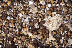 'Beach Tree' (duobel) Tags: pebbles shells stone beach nature abstract texture patterns