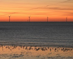 Wind Turbines and Seabird Sunrise - Newbiggin Beach (Gilli8888) Tags: newbigginbythesea newbiggin northeast coast seaside northumberland sunrise shoreline seascape sun sky rocks beach turbines northsea nikon p900 coolpix silhouette silhouettephotography windturbines