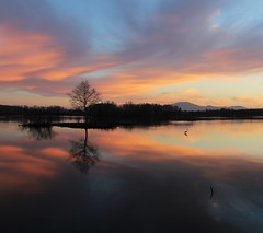 oasi albero cielo uccello riflessi (Gigliola Spaziano) Tags: pink nature water light sunset outside sky clouds landscape lake bird explore